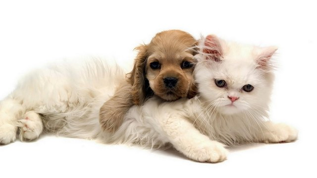 Комплексное экологическое собеседования жилья: животные в квартире