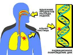 радон попадает в организм ребенка через легкие