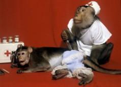 обезьяны измеряют уровень радиации