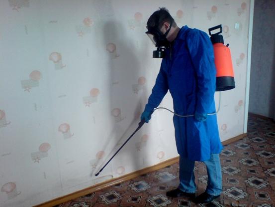 уничтожение тараканов в СПб